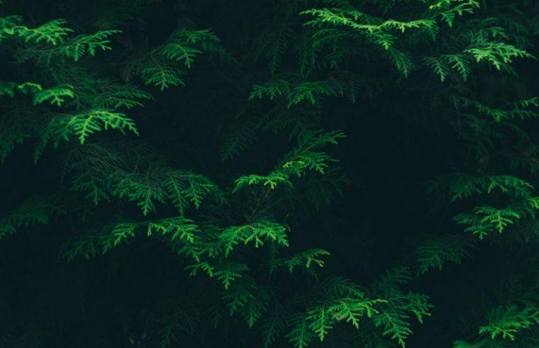 klorofil berperan penting dalam fotosintesis
