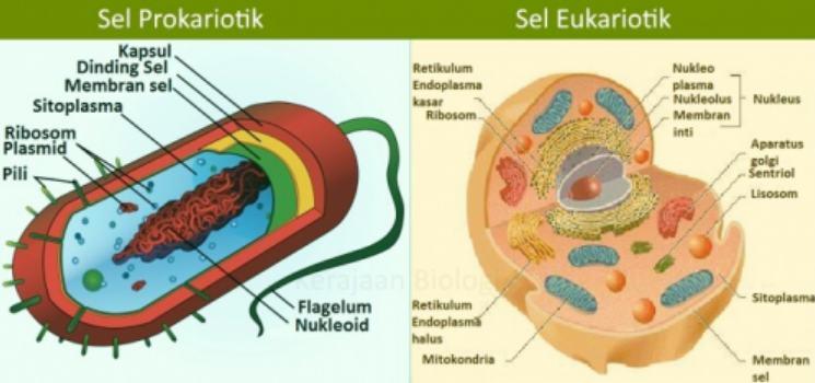 Bentuk dan ukuran ribosom