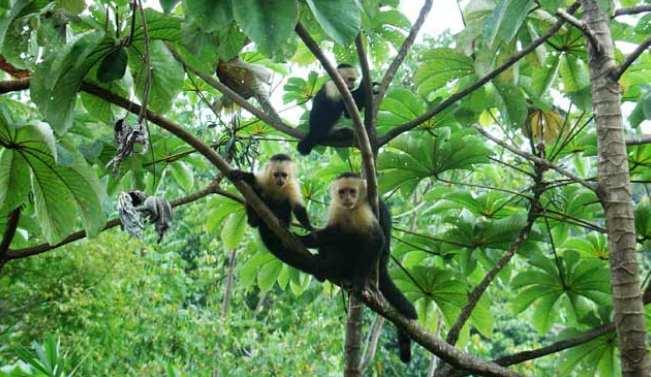 Dampak positif tenaga endogen habitat flora dan fauna