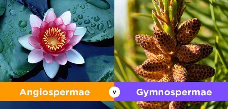 Perbedaan Bentuk Daun gymnospermae dan angiospermae