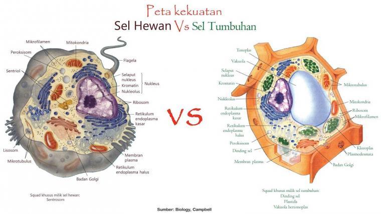 gambar perbedaan sel hewan dan tumbuhan terbaru