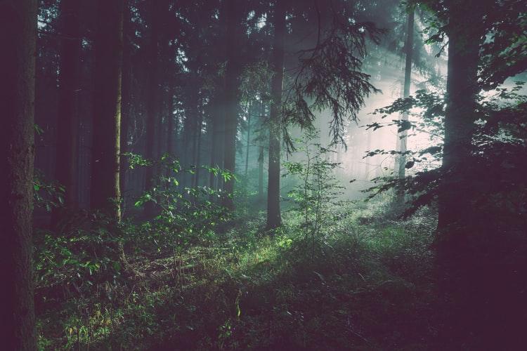 Penerapan Sila Kedua Pancasila menjaga kelestarian alam