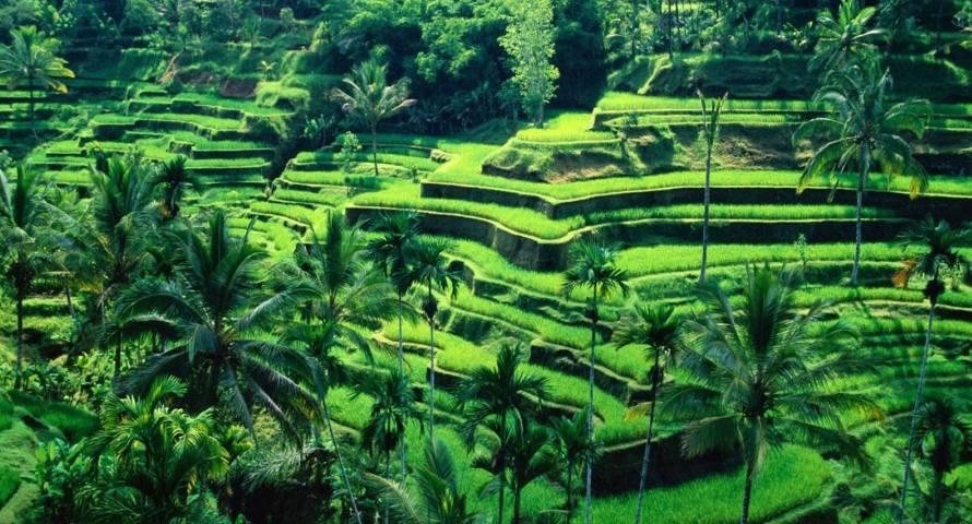 contoh sikap cinta tanah air Memanfaatkan sumber daya sebaik mungkin